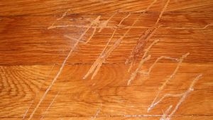 Scratches-from-Wood-Floors