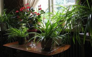 houseplants-care